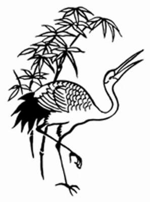 robin8kraanvogel